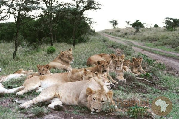 East Africa Wild Life