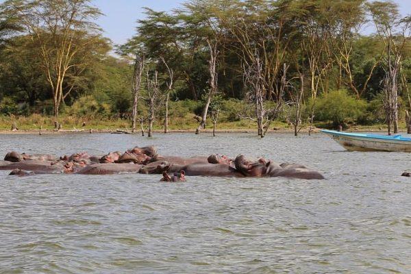 East Africa Wild Life