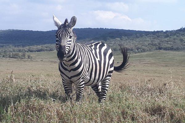 safari15